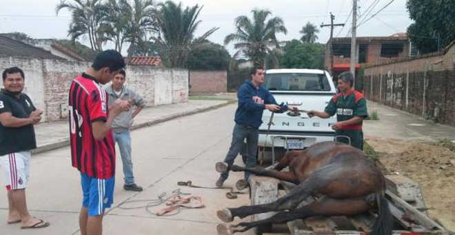 Soprama recolhe assinaturas para pedir a abolição do trabalho de cavalos na Bolívia