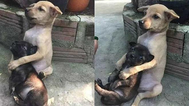 Amigos inseparáveis, filhotes ficam abraçados após serem resgatados