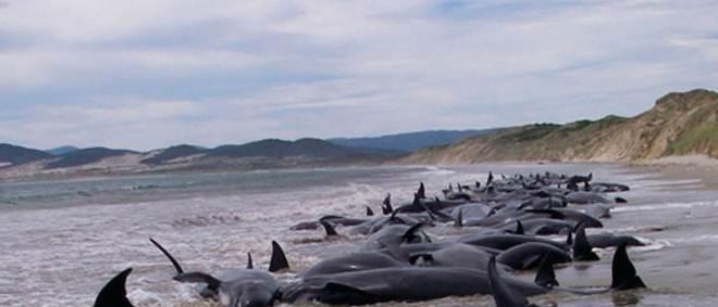 Pelo menos 70 baleias são encontradas mortas no Chile