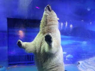 """É necessária uma ação urgente para ajudar os animais que estão definhando no """"zoológico mais triste do mundo"""""""
