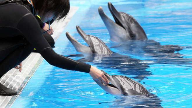 Indignação com um golfinho recém-nascido que morre no Ocean Park em Hong Kong