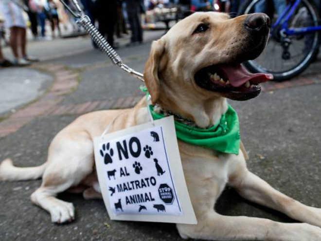 Colômbia: Autoridades de Bogotá serão investigadas caso não evitem ocorrências de maus-tratos a animais