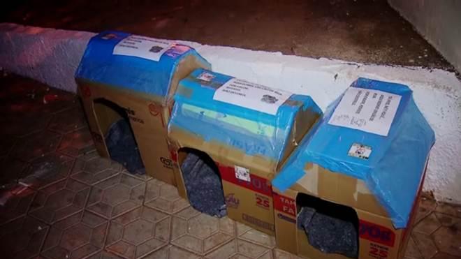 Moradora do DF espalha casinhas de papelão para cães abandonados
