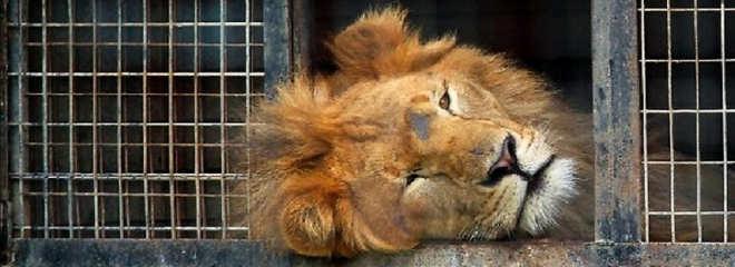 Espanha: veterinários pedem que a proibição dos circos com animais seja inclusa na nova lei