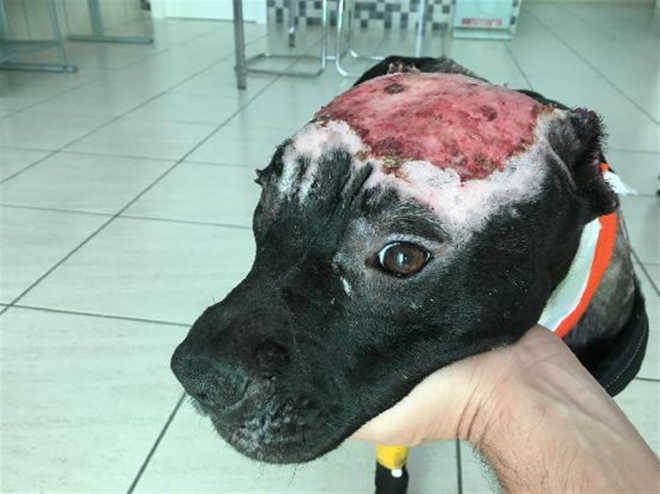 Ataram e lançaram fogo a cadela. Os internautas entregaram-nos às autoridades