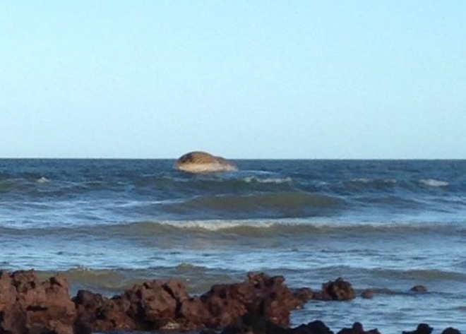 Após dois dias, Prefeitura tenta retirar carcaça de baleia da praia em Aracruz, ES