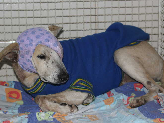 Cachorro agredido por idosa em Cachoeiro (ES) tem traumatismo craniano e segue sem previsão de alta