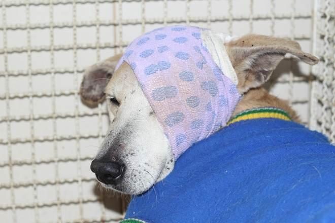 Cachorro agredido a pauladas por idosa em Cachoeiro (ES) recebe novo nome