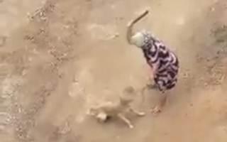 Cachoeirenses fazem campanha para tratamento de cão agredido a pauladas