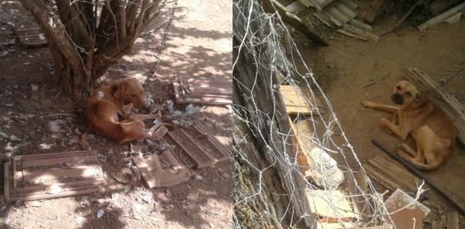 Moradora relata maus-tratos contra cão no interior de Baixo Guandu, ES