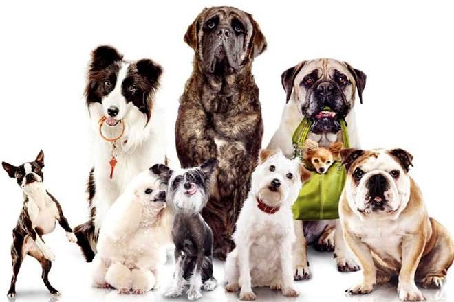 Jardim da Penha, em Vitória (ES), terá feira  para adoção de cães e gatos