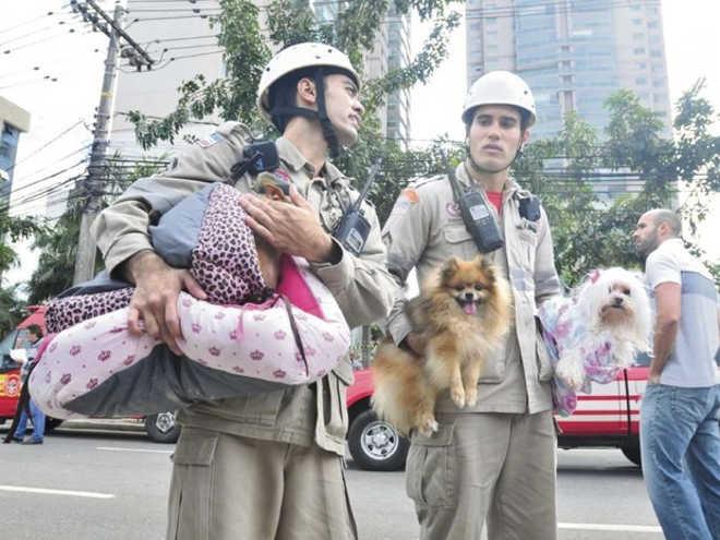 Bombeiros do ES resgatam animais após desabamento em condomínio