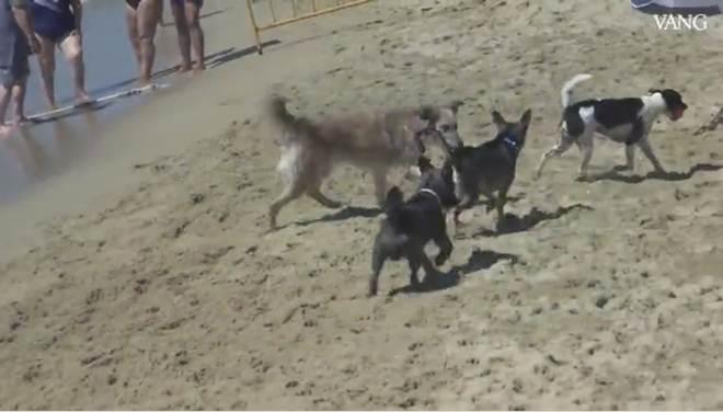 Conheça a praia para cães criada em Barcelona, Espanha