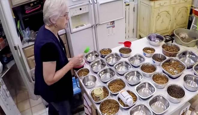 Mulher abre mão da vida pessoal para fundar um asilo de cachorros abandonados pelos tutores nos EUA