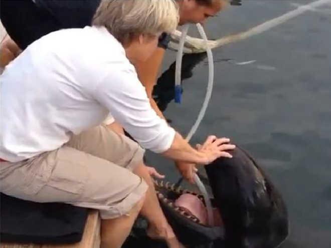 Vídeo mostrando como as baleias são hidratadas em cativeiro comprova que chegou a hora de esvaziar os tanques!