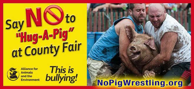 Grupo de direitos dos animais denuncia evento 'Abrace-um-Porco' em uma feira nos EUA
