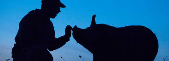 A incrível lição que podemos todos aprender com um criador de suínos que decidiu parar de matar animais