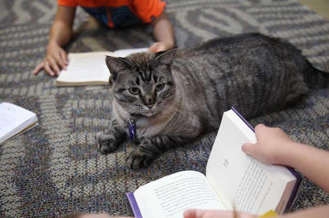 Nova votação permite que gato siga morando em biblioteca nos EUA