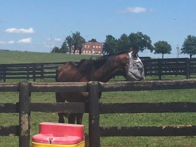 6 cavalos desnutridos abandonados por uma treinadora premiada finalmente são resgatados!