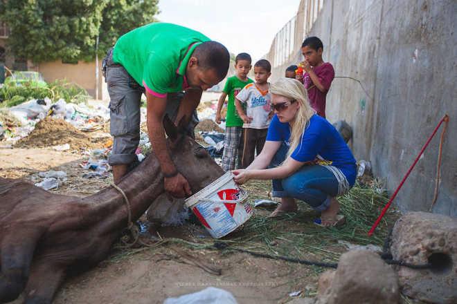 Egito realidade cavalos camelos turistas6