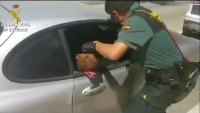 Imagens mostram polícia espanhola a salvar pitbull fechado em carro