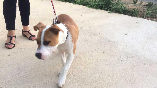 Mulher perde a tutela de seu cão após vizinha filmar espancamento