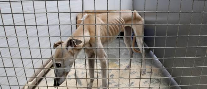 Casal detido por maus tratos a 39 gatos e 13 cães na Espanha