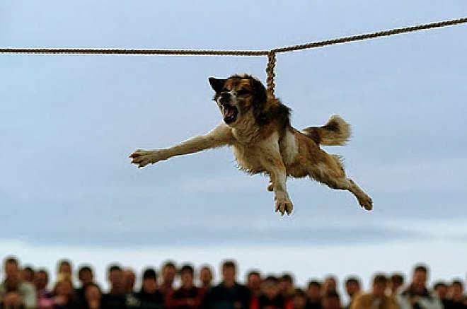 Cinco brutais tradições de maus-tratos a animais que seguem sendo praticadas no mundo