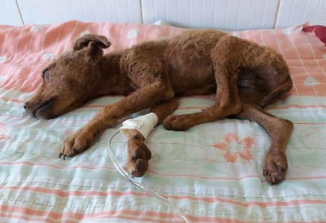 Cachorrinho abandonado em Águas Lindas (GO) precisa de ajuda