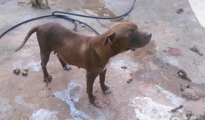 Polícia Civil recebe denúncia sobre cães sem comida e água em Mineiros, GO