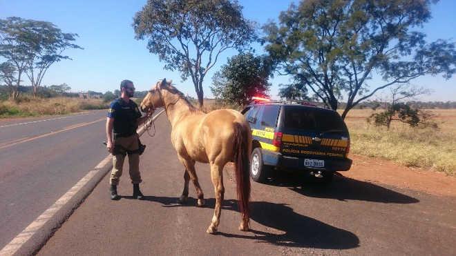 Agentes da PRF domam cavalo e retiram animal de situação de risco, próximo a Paranaiguara, GO