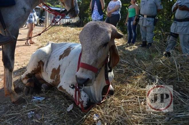 ONG denuncia maus-tratos a animais na cavalgada em Rialma, GO
