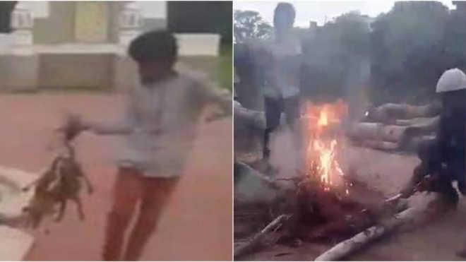 Adolescentes queimam três filhotes de cachorro, filmam e postam nas redes sociais