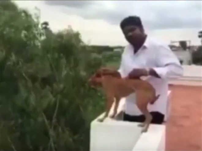 Identificado homem que atirou cão de um prédio