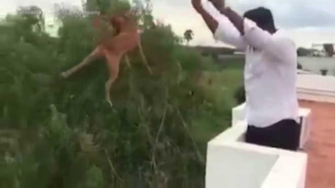 Vídeo mostra homem arremessando cão do alto de um prédio; polícia investiga