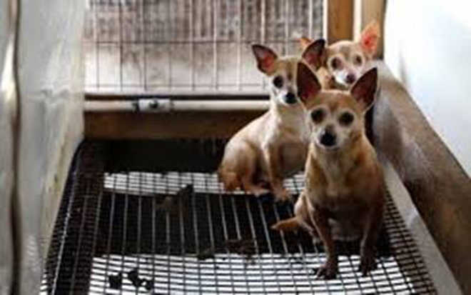 Ativistas pedem avaliação psiquiátrica de garotos que queimaram os cachorros vivos