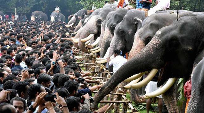 Grupo de direitos dos animais alega tortura de elefantes no templo Vadakkumnathan, na Índia