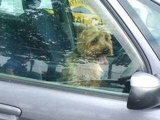 Cão é resgatado por policiais após ser trancado pelo tutor em carro na Inglaterra