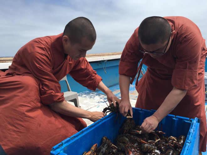 Monges budistas gastam R$10 mil para libertar lagostas que seriam devoradas na Inglaterra