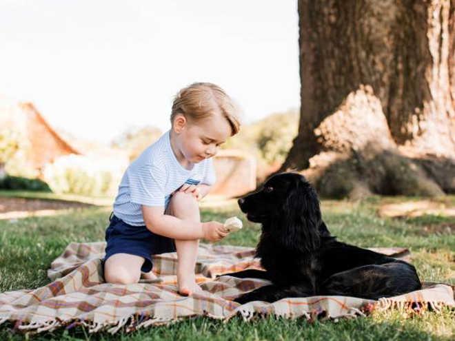 Foto de príncipe George com cão alarma defensores dos animais
