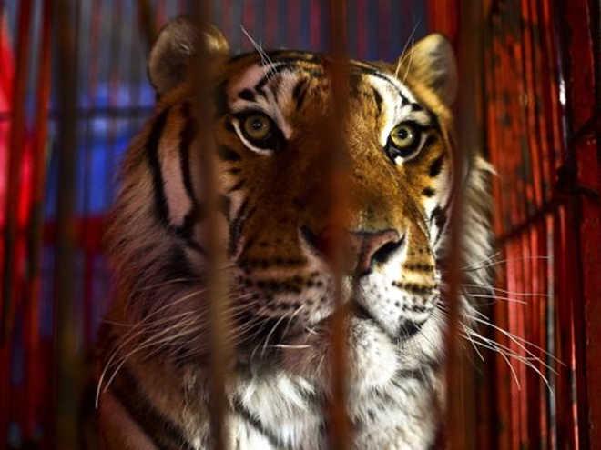 Conselho da cidade de Dublin pede proibição de circos com animais