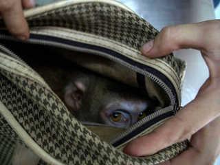 Resgatistas encontram uma surpresa muito triste dentro de uma bolsa abandonada