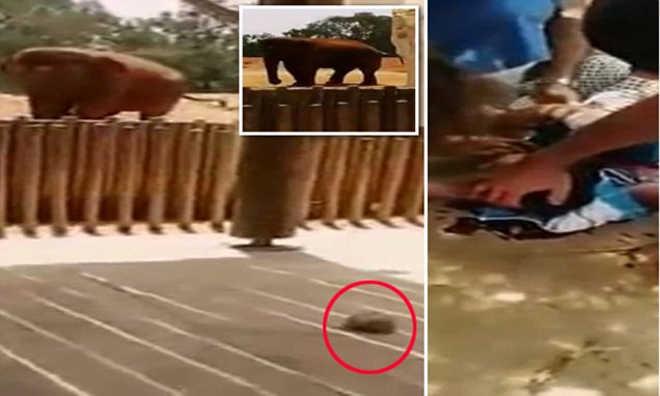 Elefanta confinada mata ao jogar pedra na cabeça de criança que tirava fotos no zoo