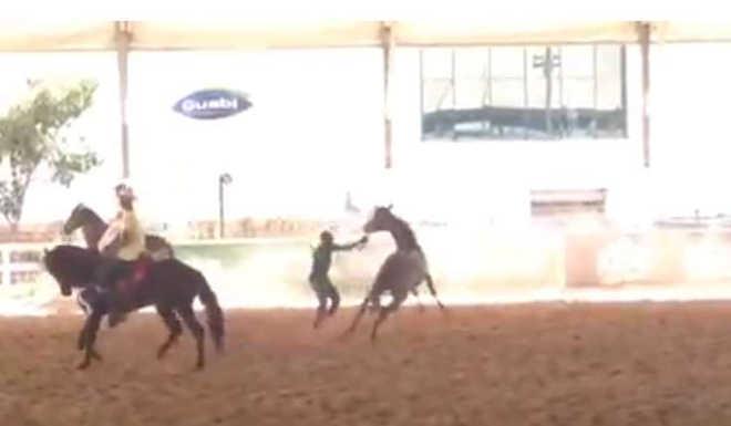 Tratador flagrado agredindo cavalo em exposição em Belo Horizonte (MG) é demitido