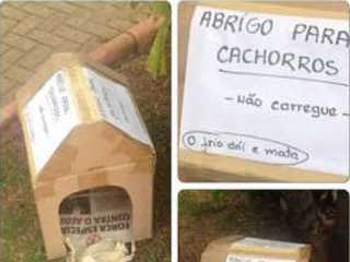 Prefeitura de Contagem (MG) retira casinhas de cachorros de praças e revolta protetores dos animais