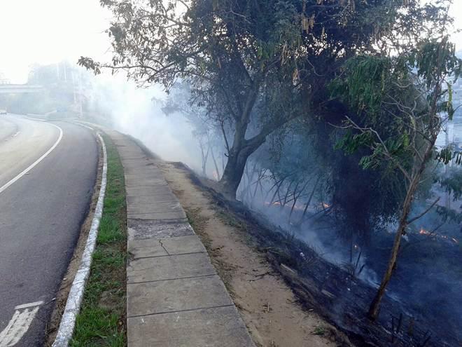 Animais silvestres são vítimas de queimadas em Leopoldina, MG
