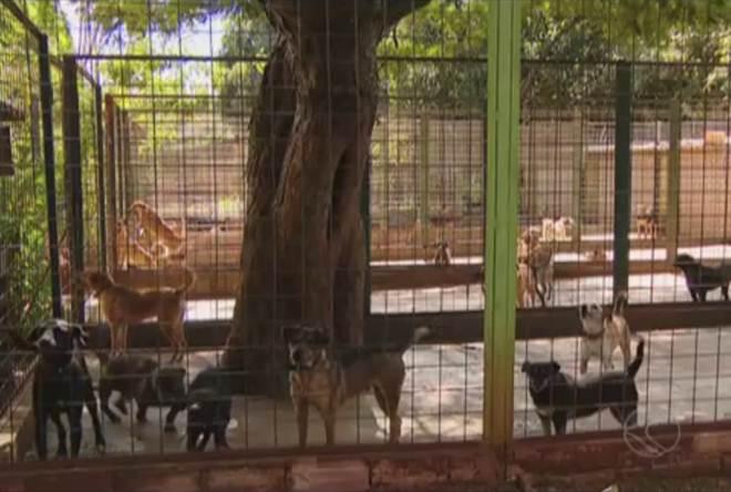 ONG arrecada doações para instalar clínica veterinária em Uberlândia, MG