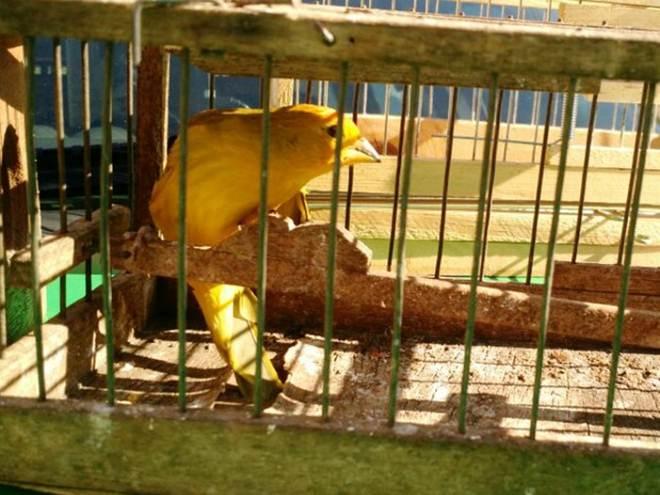 PM flagra criação ilegal de animais silvestres em Uberlândia, MG