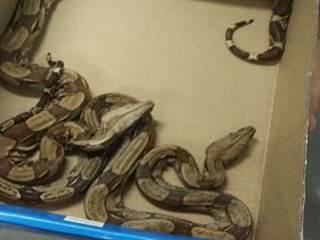Homem é preso em Uberlândia (MG) por manter serpentes em cativeiro