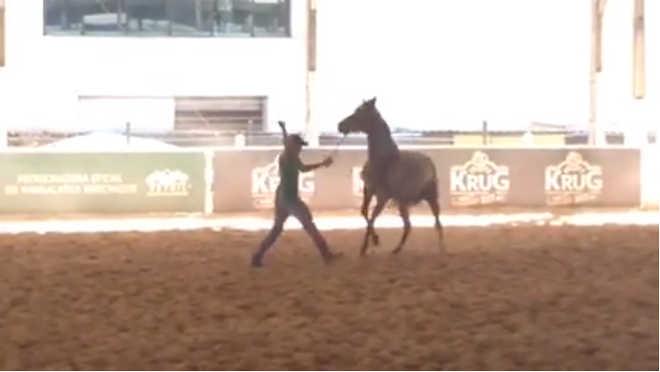 Vídeo com flagrante de maus-tratos a cavalo em exposição em BH repercute na internet